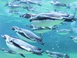 葛西臨海水族園 【公益財団法人 東京動物園協会】のアルバイト情報