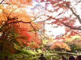 小石川後楽園 (公益財団法人 東京都公園協会)※6月下旬オープン予定のアルバイト情報