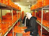 フジッコ株式会社 横浜工場のアルバイト情報