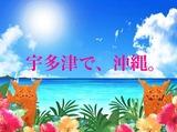 沖縄食堂てぃーだかんかんのアルバイト情報