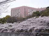 ホテル椿山荘東京 ※(有)双葉配ぜん人紹介所のアルバイト情報