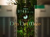 デア・デルマーレのアルバイト情報