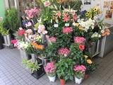 有限会社花の店 花やすのアルバイト情報