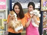 仔犬の広場ポッポ 京都店のアルバイト情報