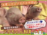 イセファーム東北株式会社 徳田農場のアルバイト情報